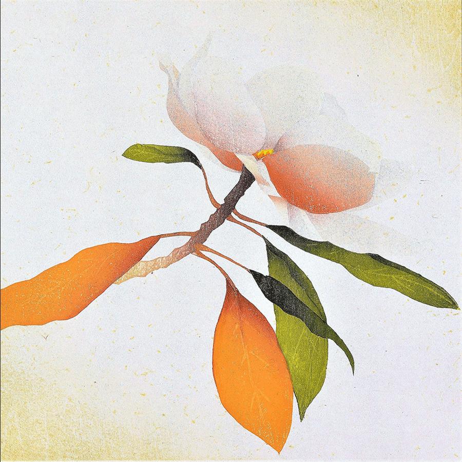 miyayama_Magnolia-4