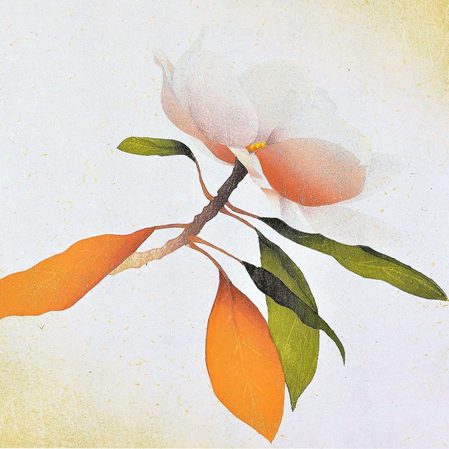 miyayama_Magnolia-4a